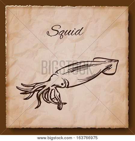 Seafood vintage illustration with squid. Template for menu or brochure. Vector illustration