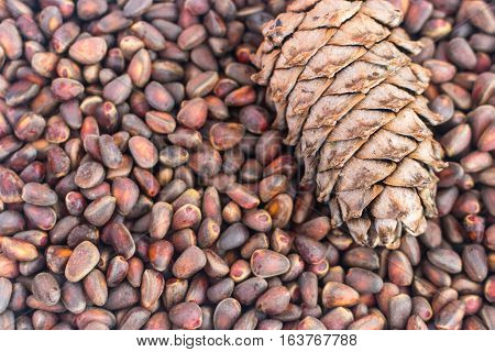 Siberian Cedar Pine Nuts Background