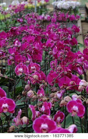Spring Flower For Tet, Dalat Orchid Garden
