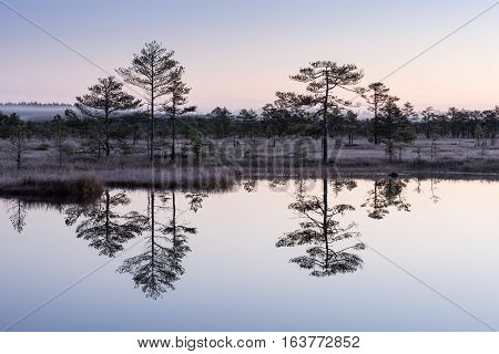 Sunrise in the bog. Icy cold marsh. Frosty ground. Swamp lake and nature. Freeze temperatures in moor. Muskeg natural environment. Beautiful trees sky and cloud reflection in water in the fen.