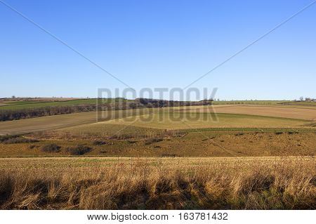 Dry Winter Landscape
