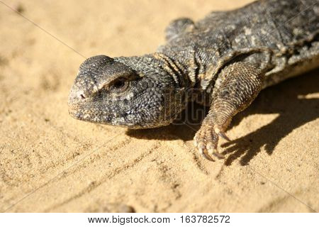 One of the most successful life form of the Earth is reptile. Reptiles are the initial rulers of Earth