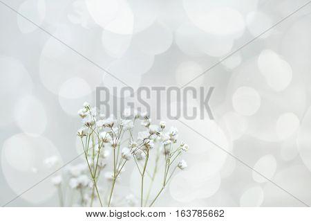 Sprig of flowers gypsophila. romantic card. March 8