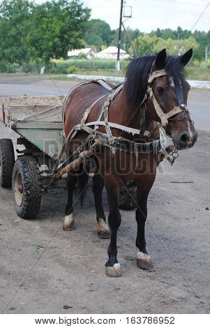 A brown horse with a cart standing on the road