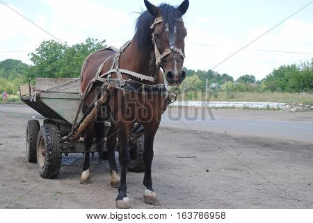 Brown horse and cart standing on the road