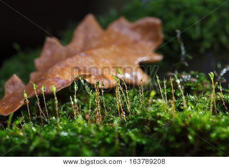 Moss After Rain On Forest Floor
