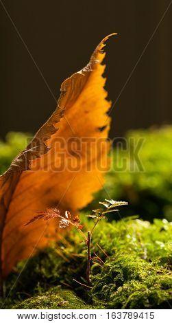 Autumn Leaf Refuge