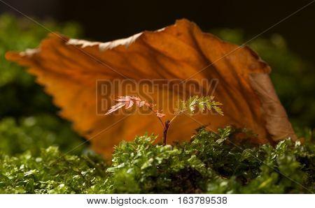 Shelter For Tiny Tree