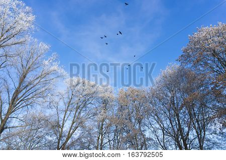 Winter Trees in front of a clear Sky