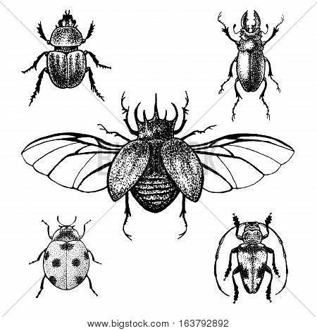 Hand drawn beetle set. Isolated black and white ink insects for design, icons, logo or print. Blackwork graphycs