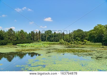 Landscape With Big Pond