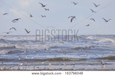 View at windmill park in sea in The Netherlands near Velsen with seagulls