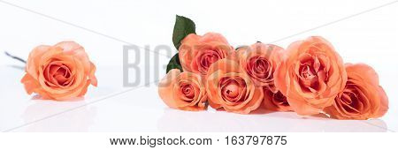 Orange Or Salmon Colored Roses In Front Of White