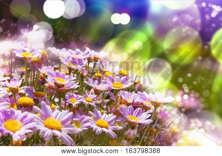 Flowers background.Spring flowers with sunshine.Spring flowering meadows and sunbeam background