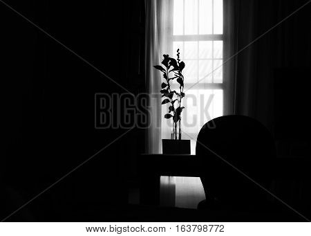 Black and white silhouette of back lighted plant, with light coming through window into a room, horizontal.