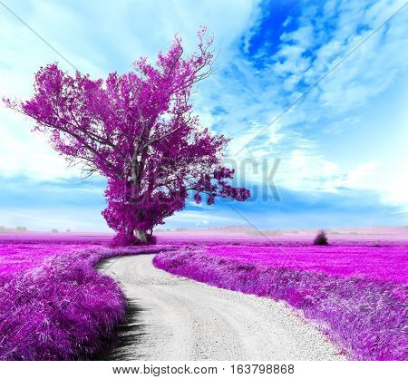 Surreal tree and dreamscape.Road through the fields