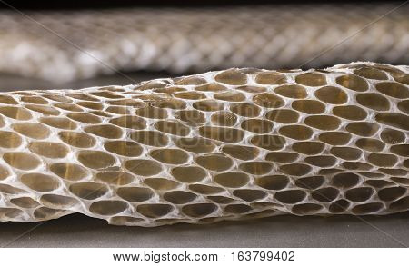 View of shed snake skin close up.