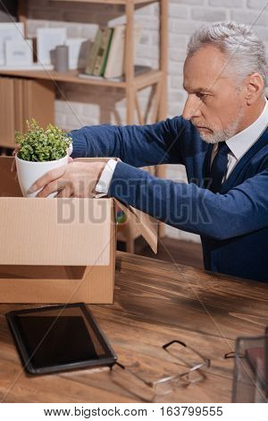 Being careful with it. Stylish upset elderly executive putting away the favorite item in his office while sitting at his table after being fired
