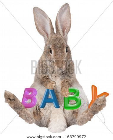 Cute bunny rabbit with Baby letters isolated