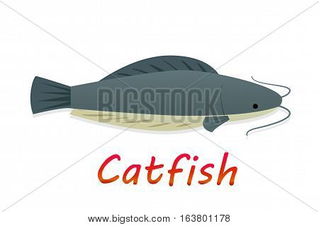 Cartoon catfish in flat style vector design