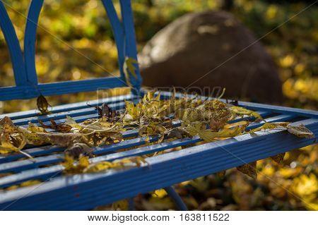 Accessory, bank, decoration, garden bench, garden, gardening, autumn, autumn leaves, autumn sun, foliage, November, park bench, blue