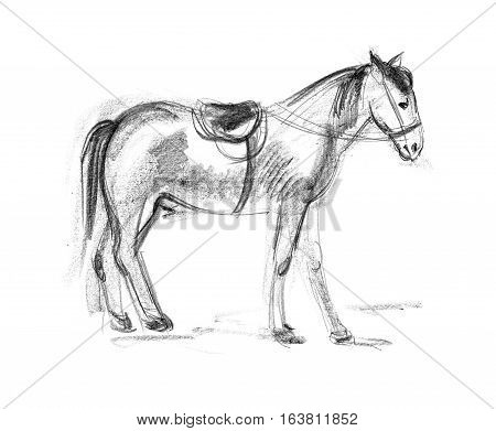 Horse. Hand-drawing in pencil. Isolated on white background