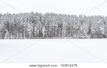 Snowy forest at background frozen lake at foreground in winter