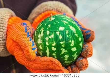 Ripe Juicy Watermelon In His Hands,  Summer Berries