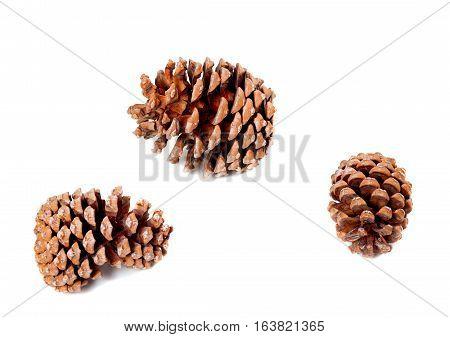 Three big pine cones. Isolated on white background.
