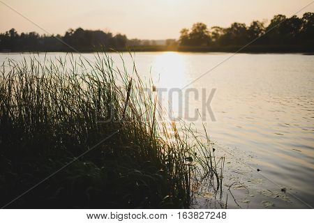 beautiful sunset on a lake with reeds