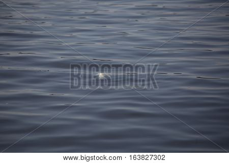 Dead fish floating in a Louisiana lake
