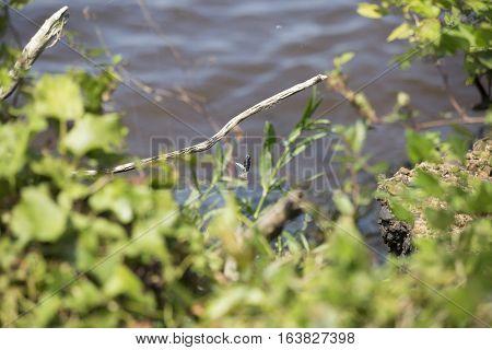 Fishing lure caught in blooming bush along lakeshore