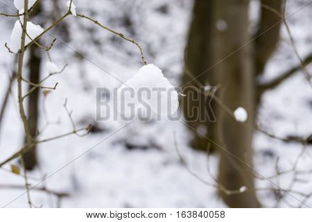 Heart-shaped Snow on a Branch. Nature in Wintr