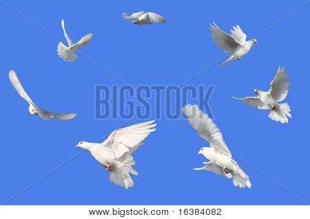 Imágenes Ilustraciones Y Vectores De Paloma Blanca Gratis Bigstock