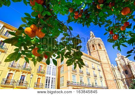 Valencia Spain Plaza de la Reina with Orange Tree.