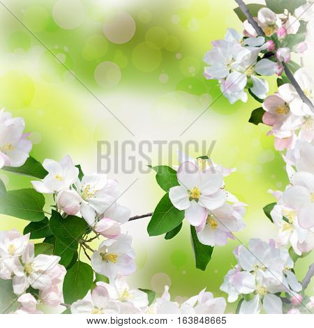 Branches of a blossoming apple tree on blurred natural background with bokeh. Floral spring background. Bright warm sunny day and awakened nature. Young foliage and flowers of apple tree close-up.