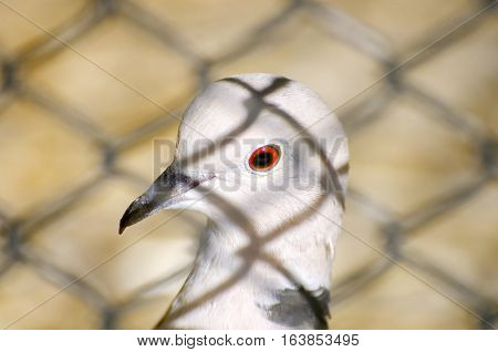 Photo of Small Dove Behind Bars in Zoo