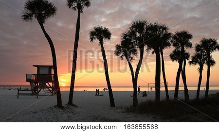 This loose palm treeline guards Coquina beach with its beauty.