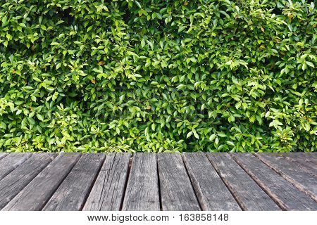 close up wood table on leaf background