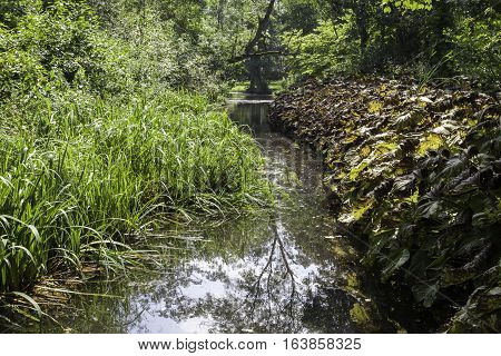 English countryside stream running through a lush green wetland forest.