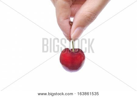 Female hand picking up a red cherry isolated on white