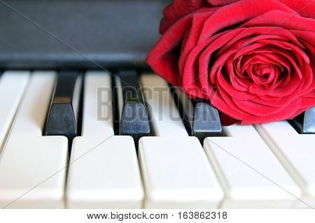 Red Rose On Piano Keyboard. Love Song Concept, Romantic Music