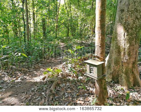 Camera trap on the tree. Trail camera for taking a picture of wildlife animal in the forest.