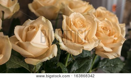 The charming bouquet of beautiful beige roses