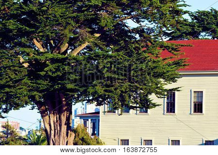 Historic building surrounded by a Cypress Tree taken at the Presidio in San Francisco, CA