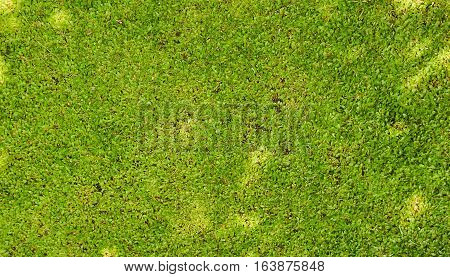 Green grass textured photo taken in Seamarang Indonesia java