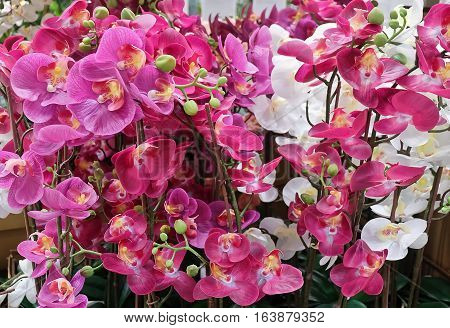 Flower and Plant White and Pink Artificial Phalaenopsis or Orchid Flower Streak for Home and Building Decoration.