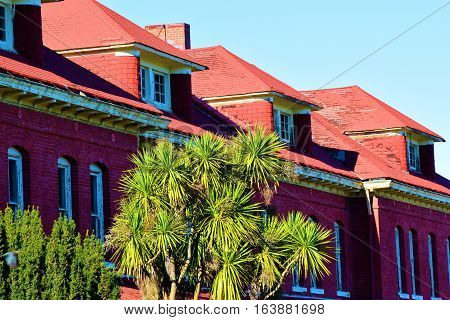 Older brick residential buildings with Yucca Plants in the front yard