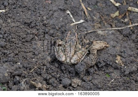 Little frog sitting on the ground photo