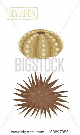 Sea urchin,  alive and dried, vector cartoon illustration